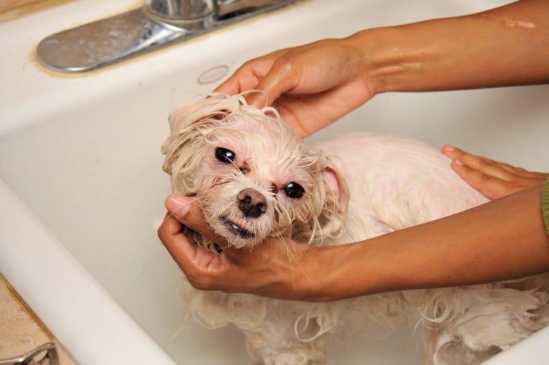 dirty dog grooming