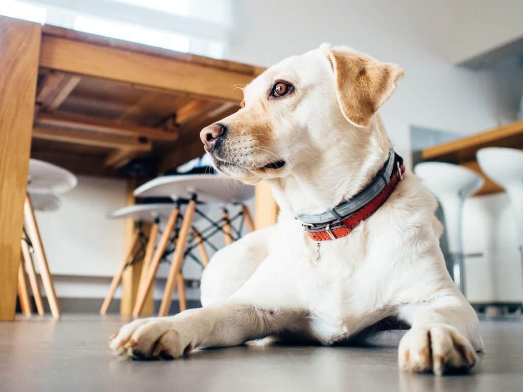 what dog foods are bad for dogs