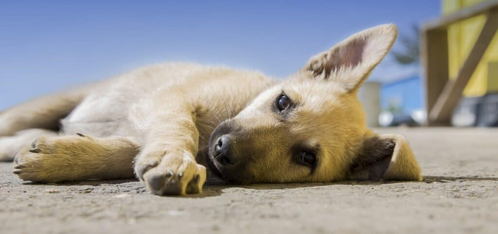 gastrointestinal diseases in dogs