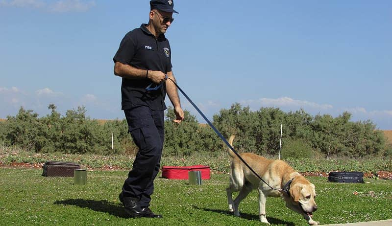 Positive dog training without treats