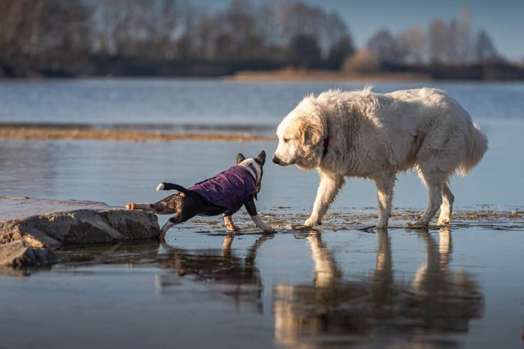 do dogs talk to each other