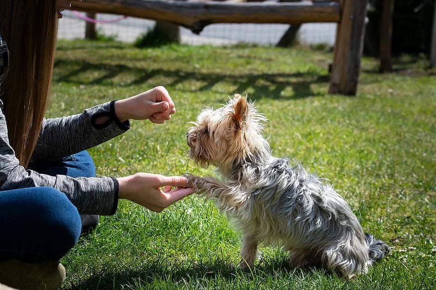 how to train a dog to give a paw