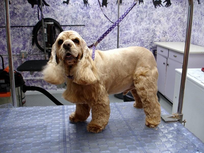 diy dog grooming table