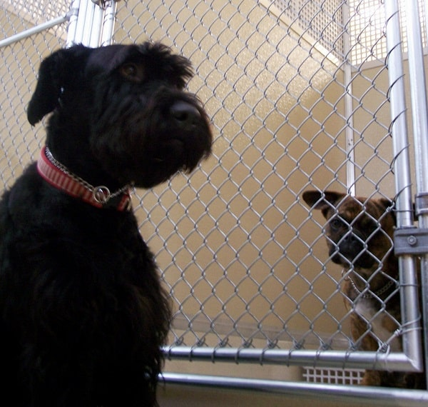 how to diagnose kennel cough