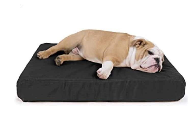 non chewable dog beds