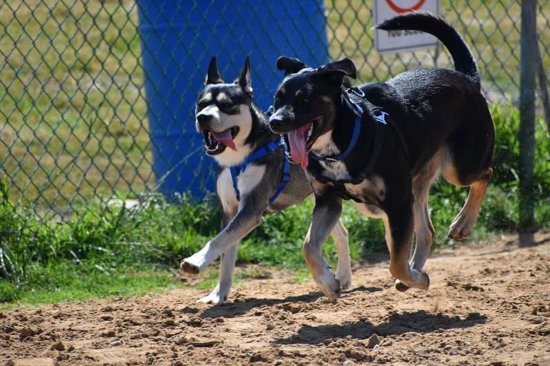 are dog parks safe