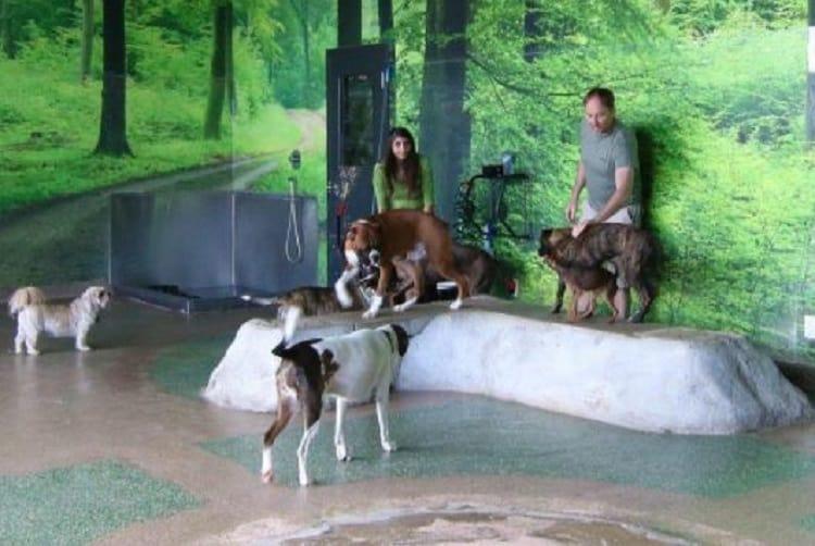 indoor unleashed dog park