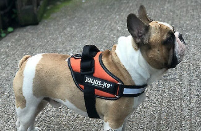 Julius K9 harness review