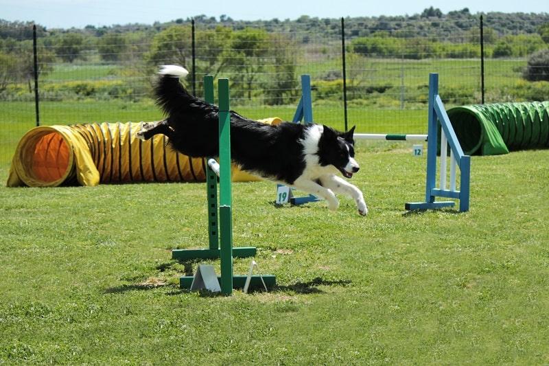 benefits of dog agility