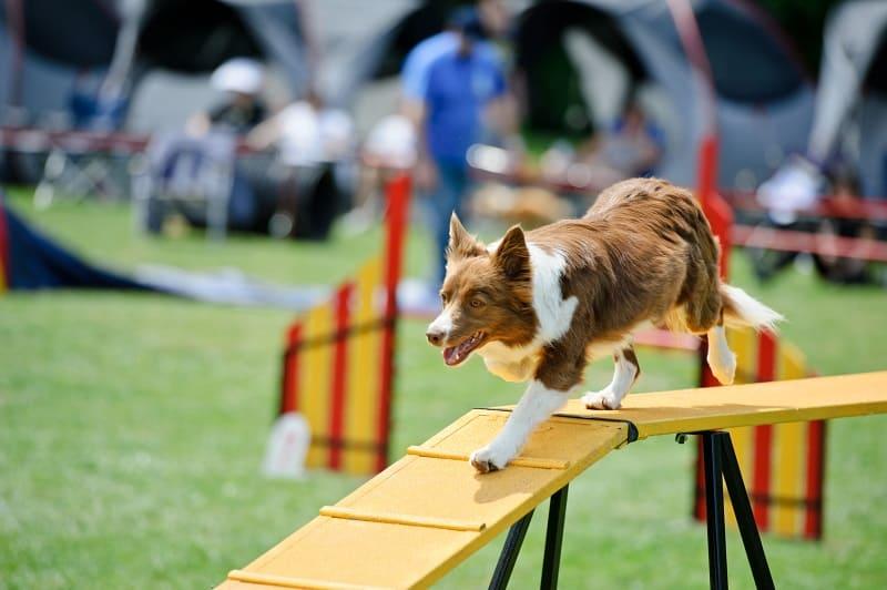 fun dog activities