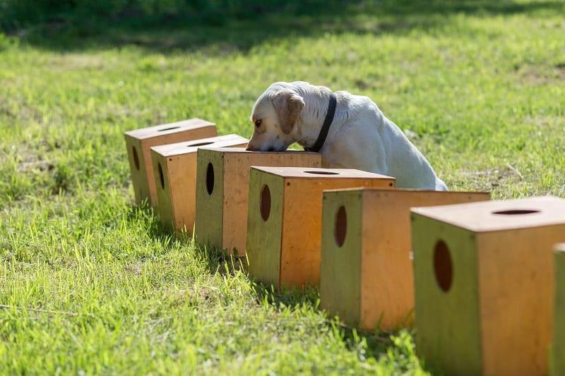fun mantrailing with dog