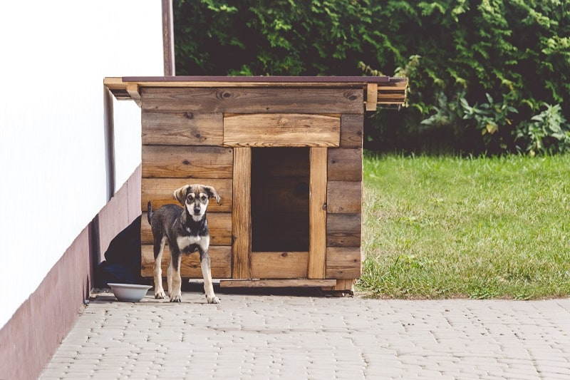 position of the doghouse on the property