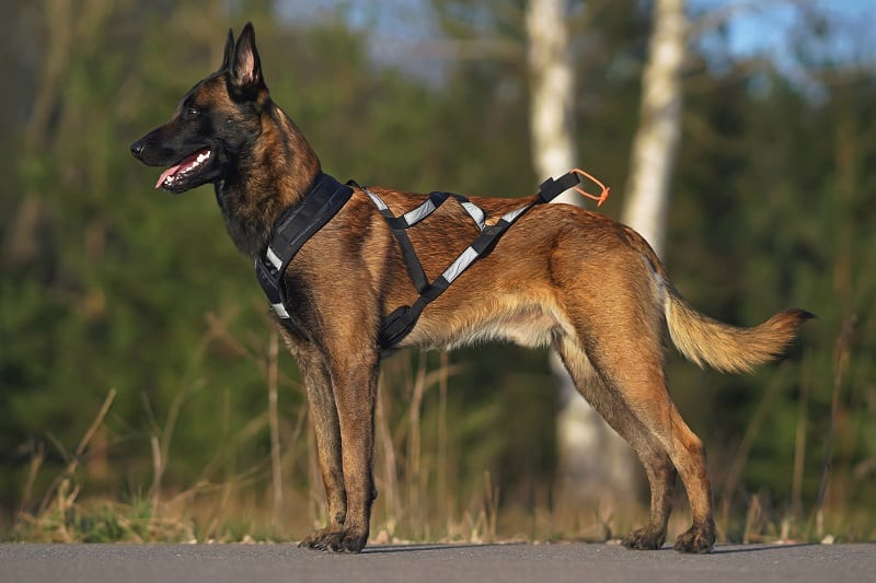 recommended harness to run with a dog