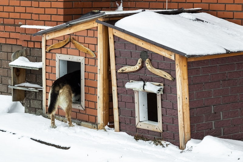 warm kennel for winter
