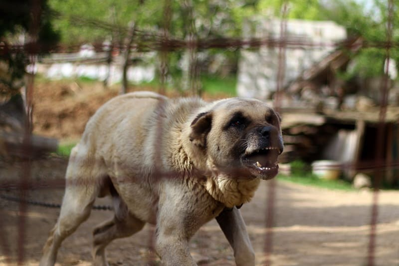 Anticipate your dog's barking