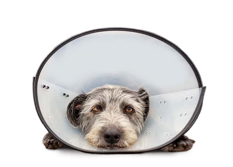 adjustable plastic cone for dogs