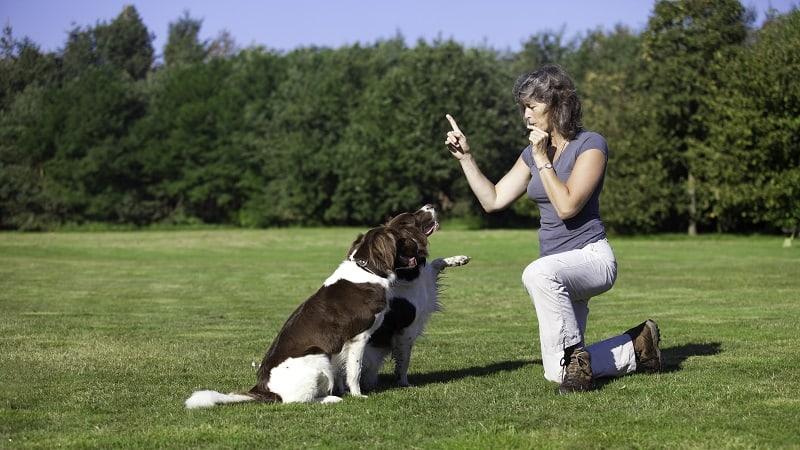 dog training with whistle