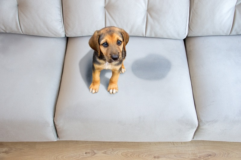 how to stop a puppy from pooping in the house