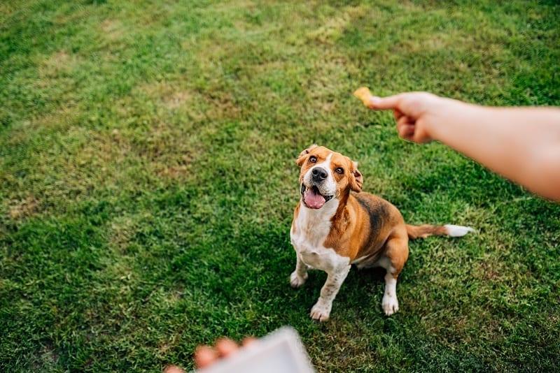 reward your dog with a treat