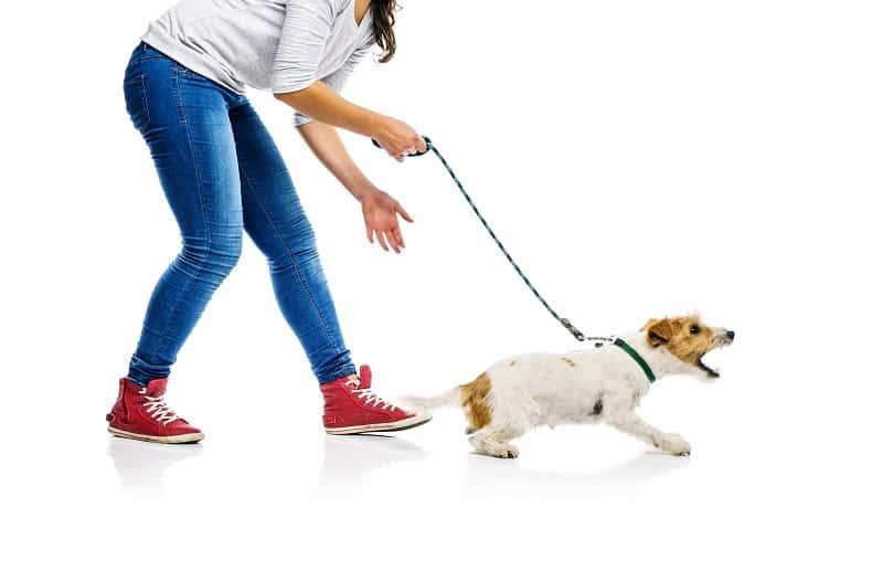 teach a dog not to bark