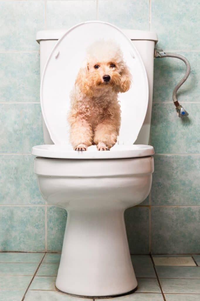 teach a dog to poop outside the house