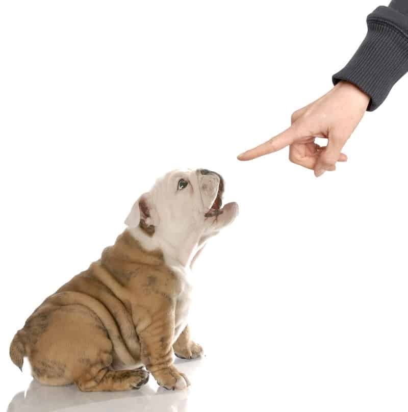 train a dog to stop barking
