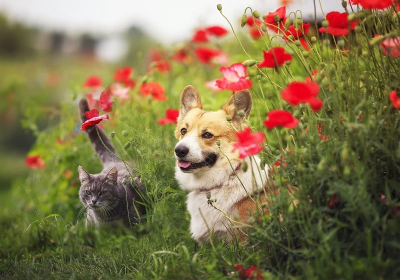 cats and dogs are sensitive to toxic products