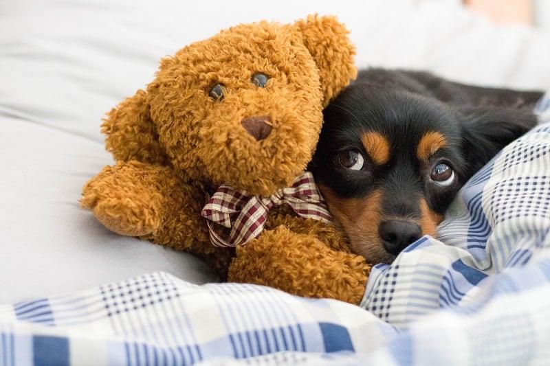 frightened dog