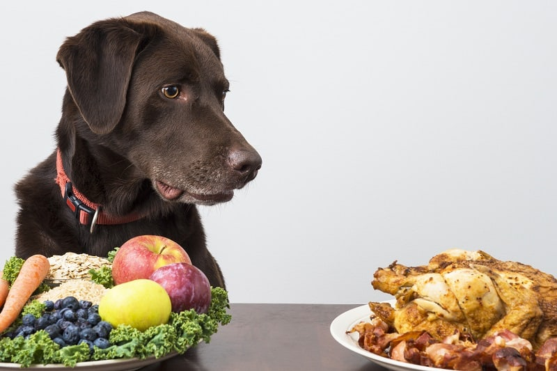 balanced diet for dogs
