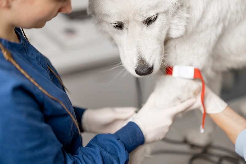 blood diseases in dogs