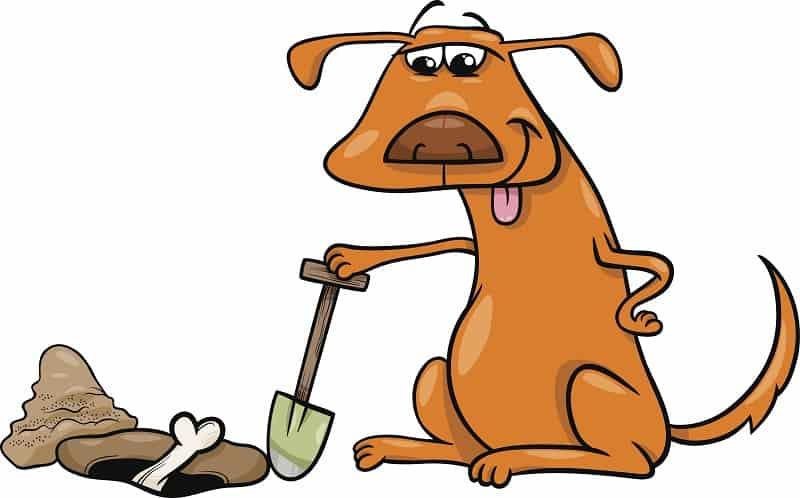 dog buries his bone