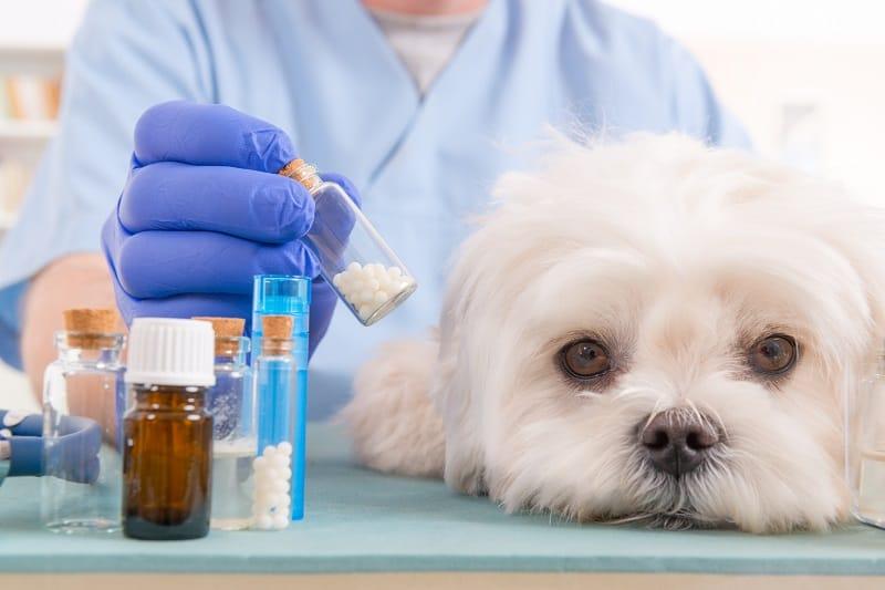 dog examination at veterinarian
