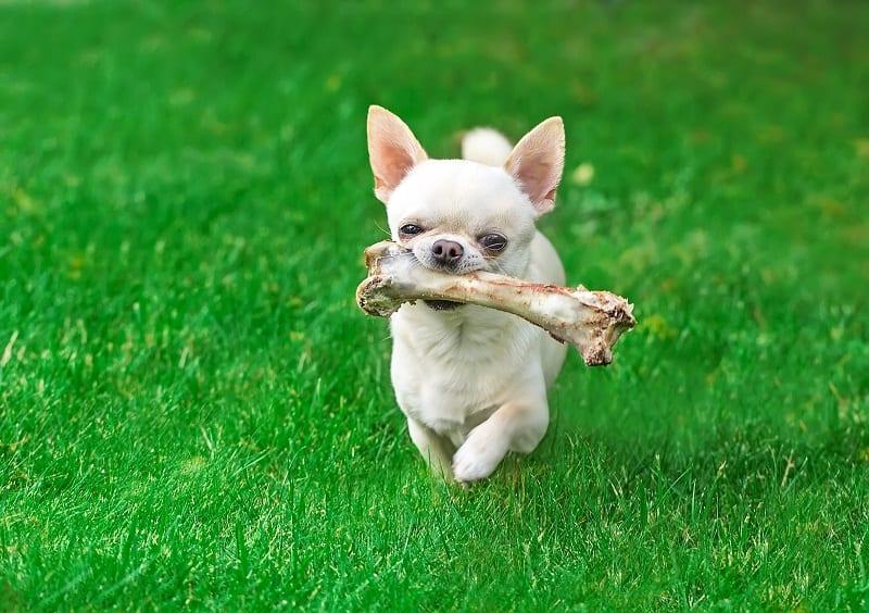 dog running away with his bone
