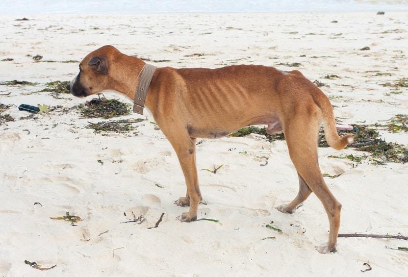 dog under his healthy weight