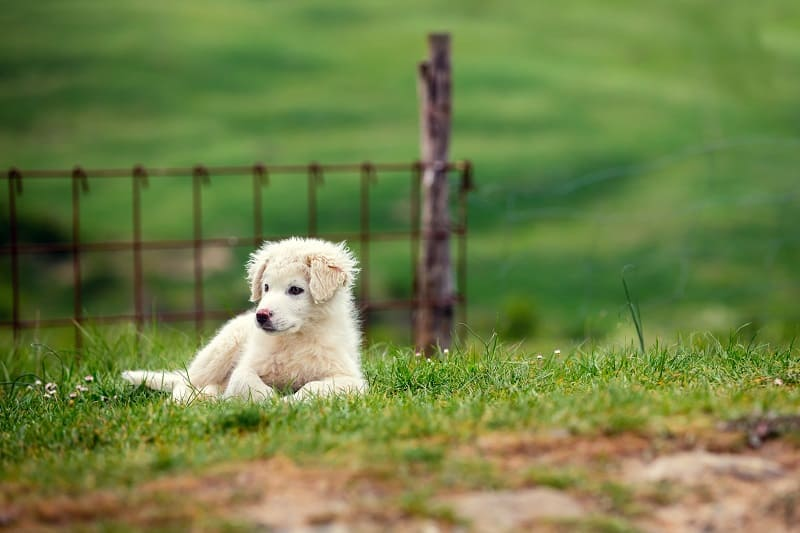 healthy growth of your puppy