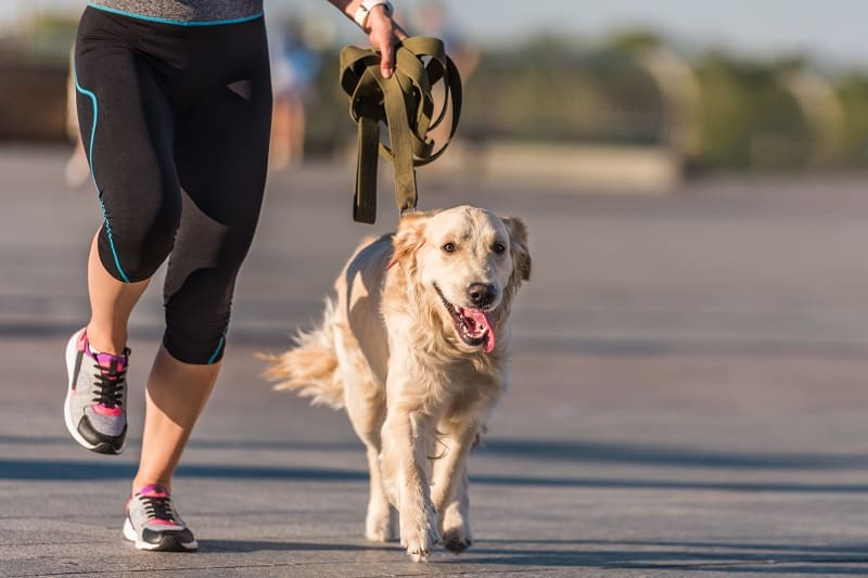 physical activity for your dog
