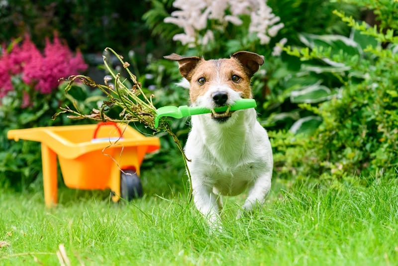 prevent your dog from being in contact with poison ivy