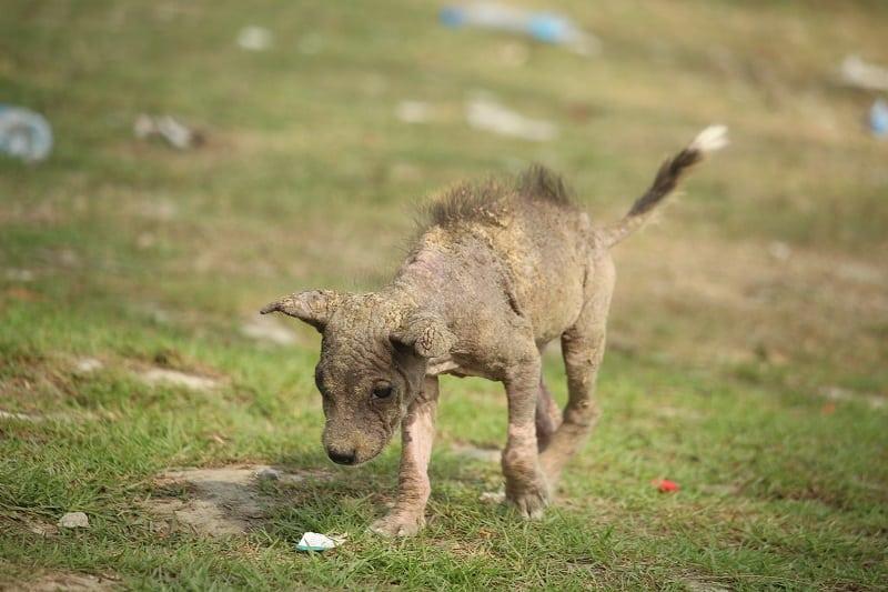 skinny dog in bad shape