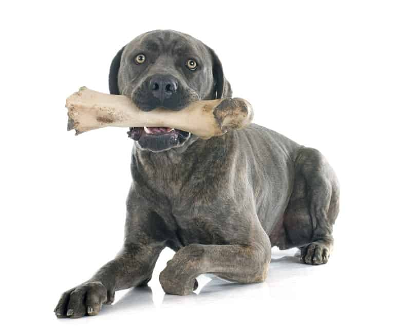 How Can Dogs Eat Lamb Bones Safely