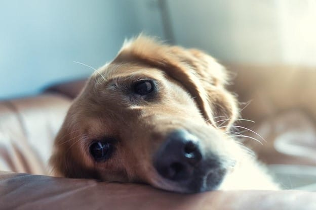 Signs of Noise Phobia in Dogs