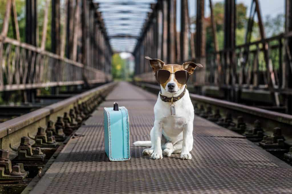 Why Do Dogs Run Away