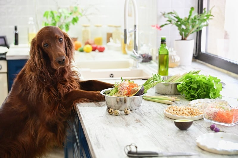 best diet for dogs