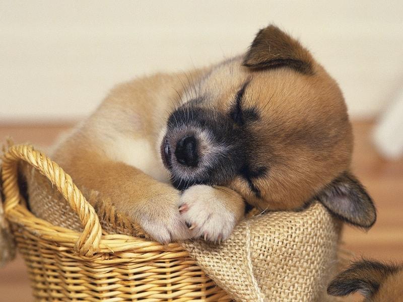 do puppy dogs sleep a lot