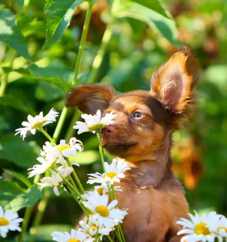 dog allergic reaction