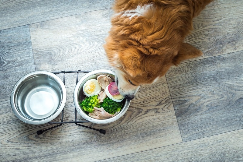 dog meal