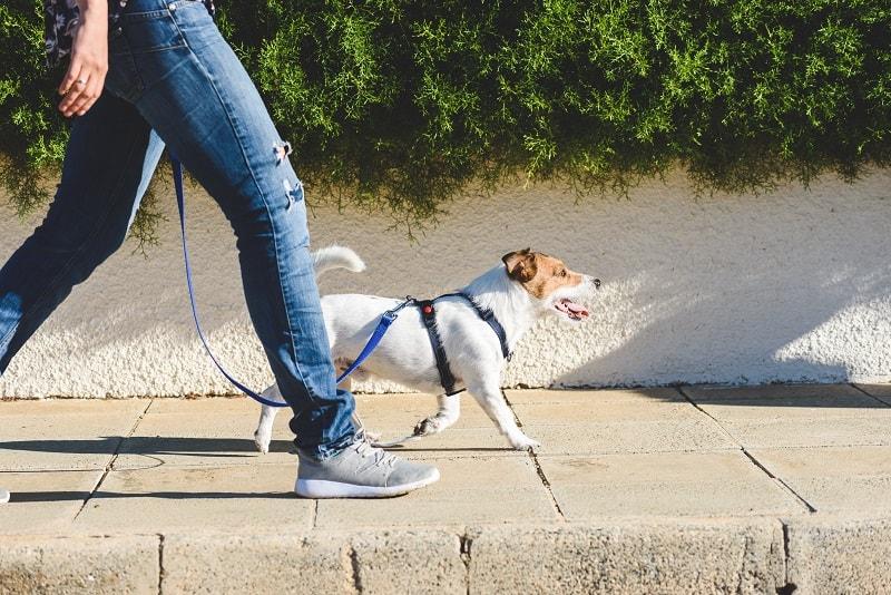 dog physical exercise