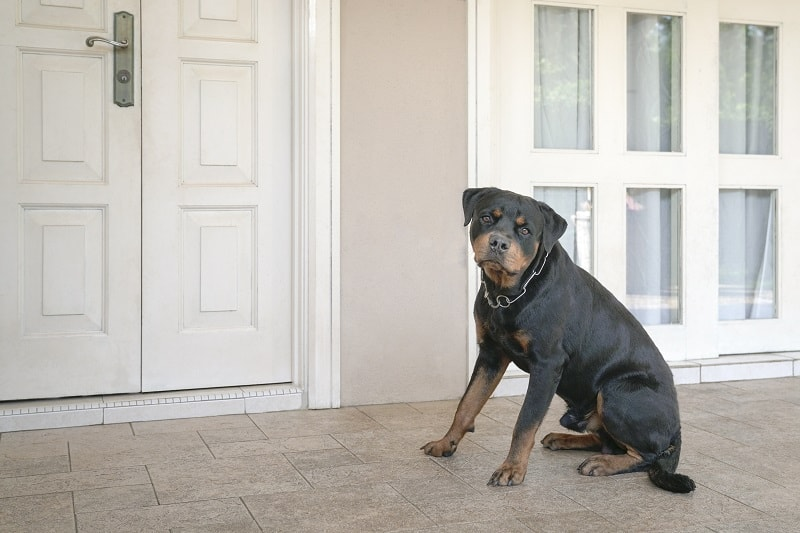 dog sitting at the front door