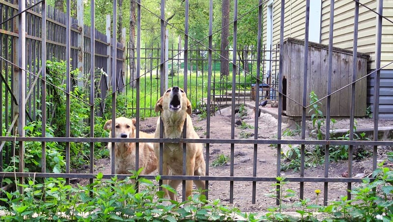 dogs guarding the entrance