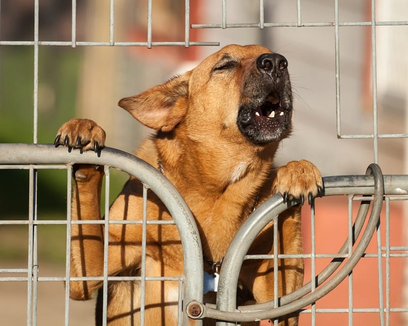 how to stop a dog from barking at guests