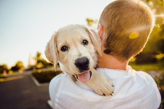 least aggressive dog breeds